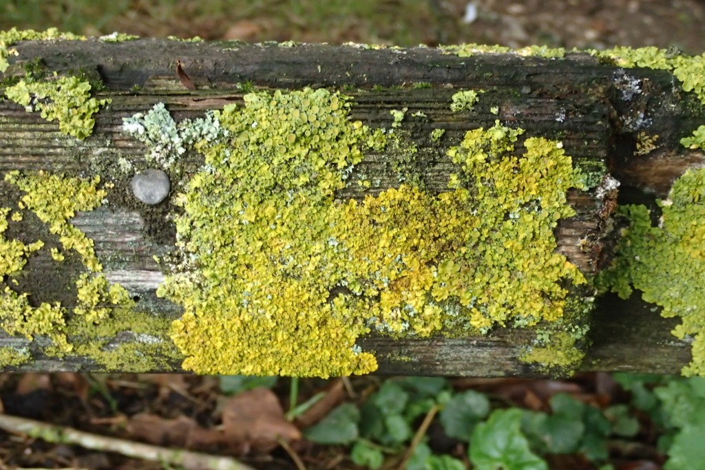 Moss on the track fence